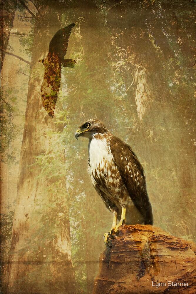 In memory of a hawk by Lynn Starner
