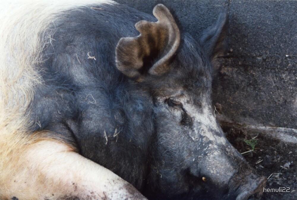 Big pig by hemuli22