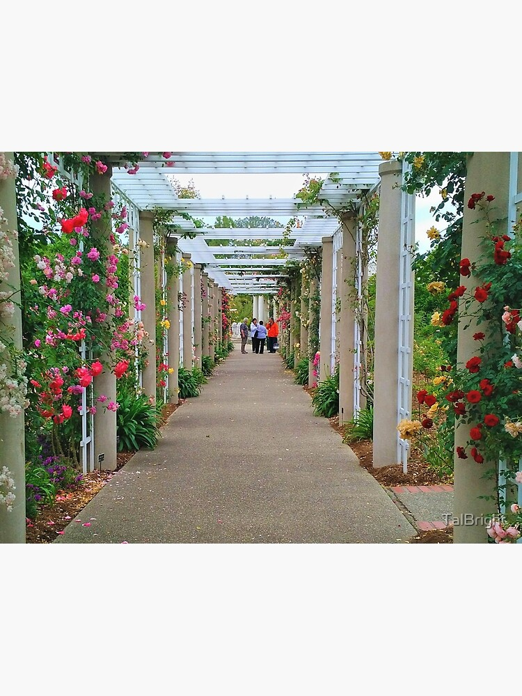 The Rose Garden by TalBright