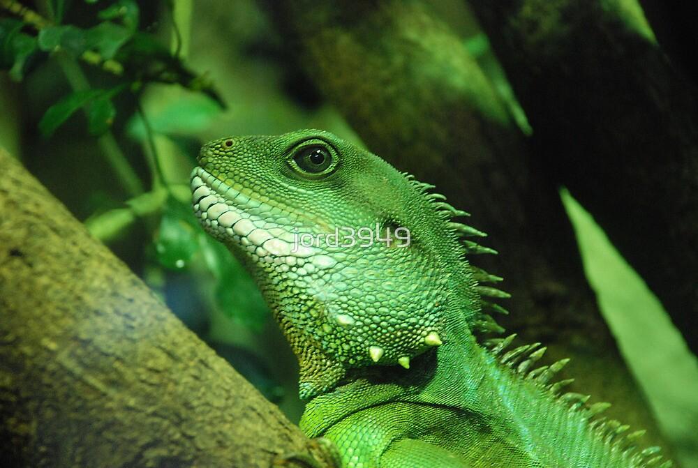 Lizard by jord3949