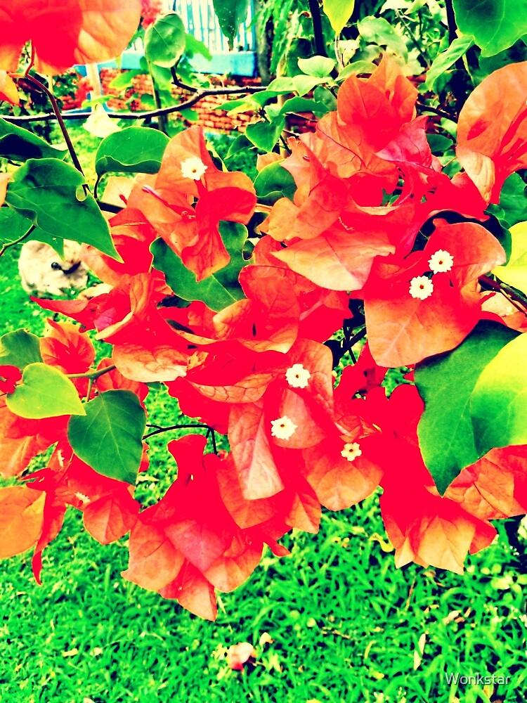 Vivid tropical Flowers in bali by Wonkstar