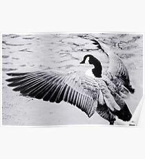 Goose Poster