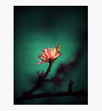 Ember Photographic Print