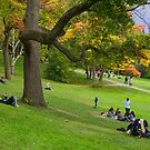 Enjoying Autumn Colours on a Slope in High Park by Gerda Grice
