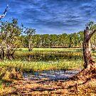 """""""Billabong at Kakadu"""" by jonxiv"""