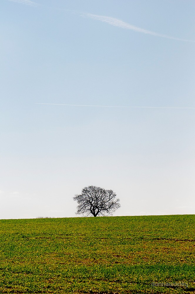 Solitude by donnaworley