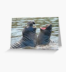 Confrontation / Conflict. Elephant Seals Reserve, San Simeon, CA Greeting Card