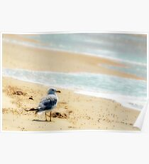 Lonely sea gull Poster