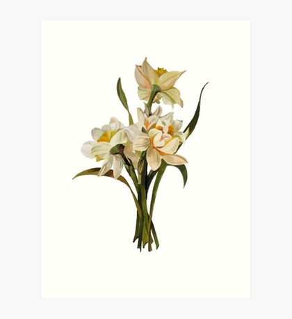 Double Narcissi In A Bouquet Isolated Art Print