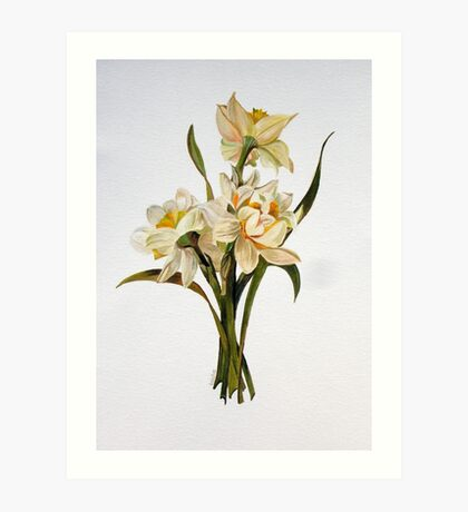 Double Narcissi In A Bouquet Art Print
