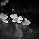 Untitled by SylBe