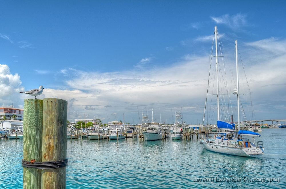 Seagull watching a boat coming back at the marina in Nassau, The Bahamas by Jeremy Lavender Photography