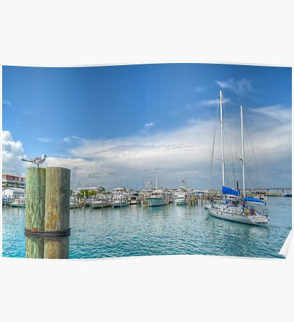 Seagull watching a boat coming back at the marina in Nassau, The Bahamas Poster