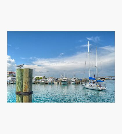 Seagull watching a boat coming back at the marina in Nassau, The Bahamas Photographic Print