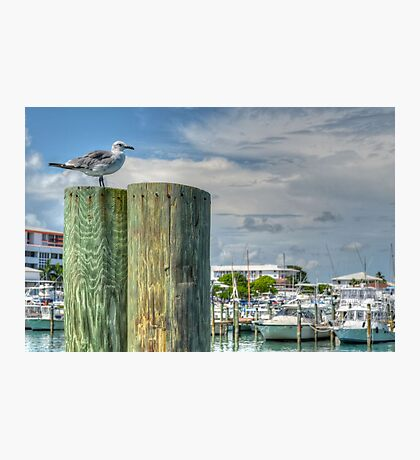Seagull at the marina in Nassau, The Bahamas Photographic Print