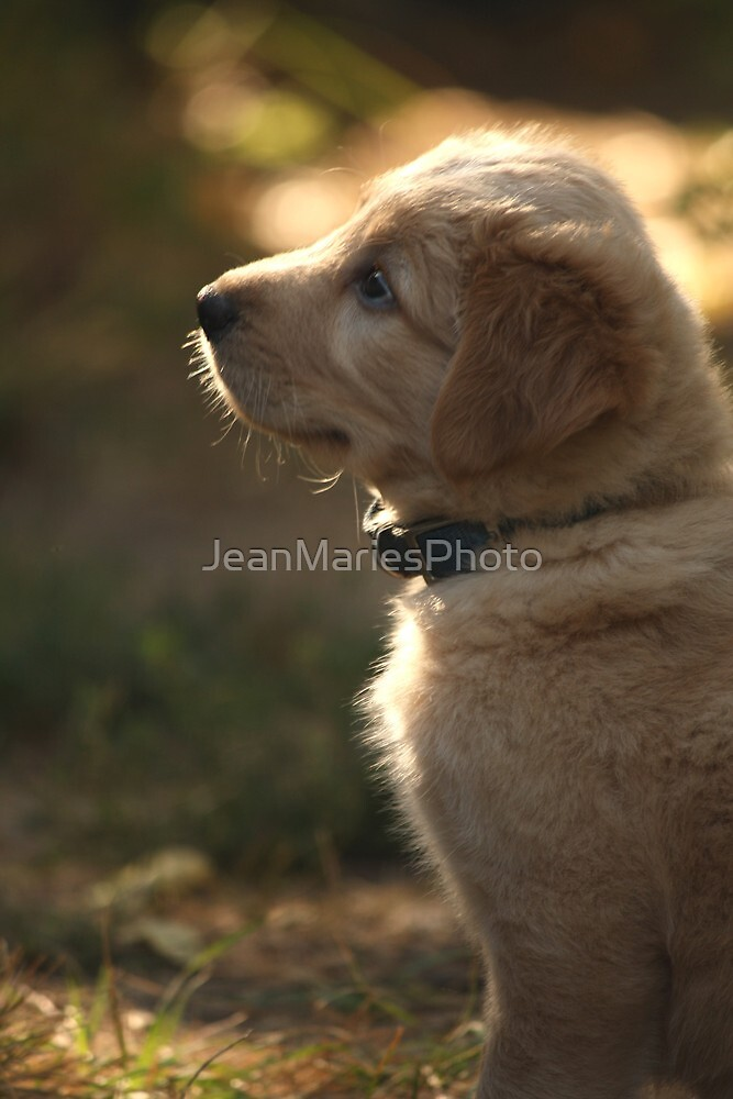 Sparky by JeanMariesPhoto