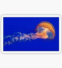 Sea Nettles Jellyfish (Chrysaora fuscescens) Sticker