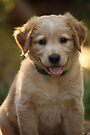Sparky - two months old by Jean Martin