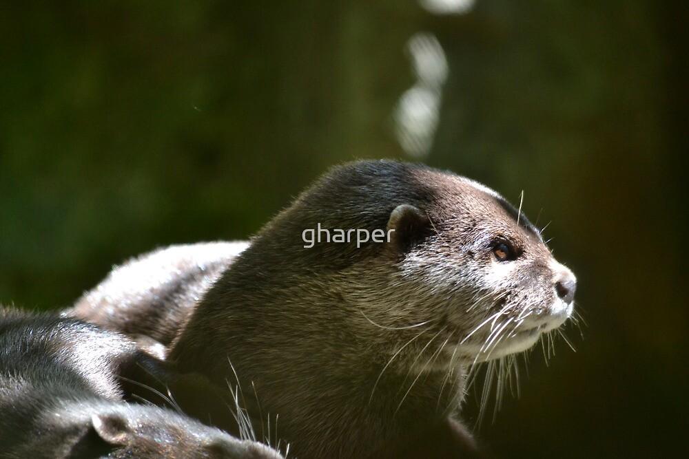 Otter 1 by gharper
