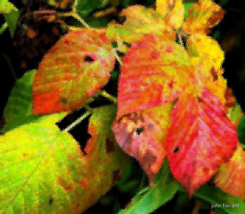 Leaves under glass by john forrant
