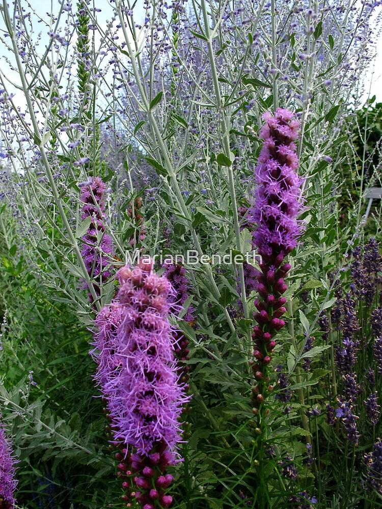 Purple Garden by MarianBendeth