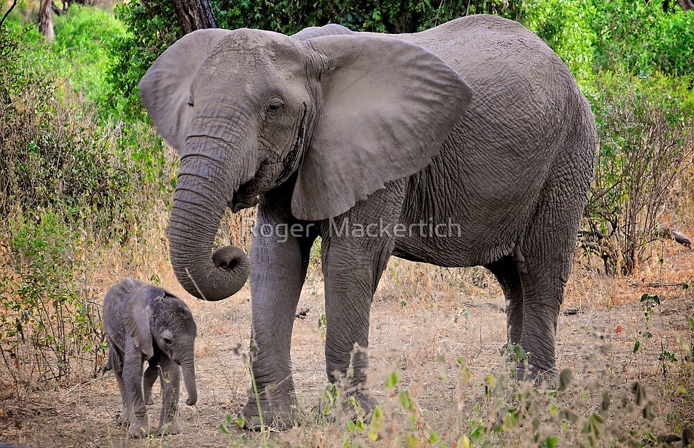 Elephant - Mother and Baby by Roger  Mackertich