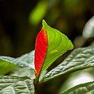 Red-Green by JagiShahani