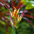 Tropical Delight by JagiShahani