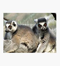 Lemurs Photographic Print