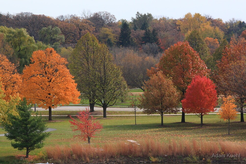 Autumn Lights by Adam Kuehl