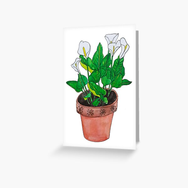 Arum lily watercolour Greeting Card