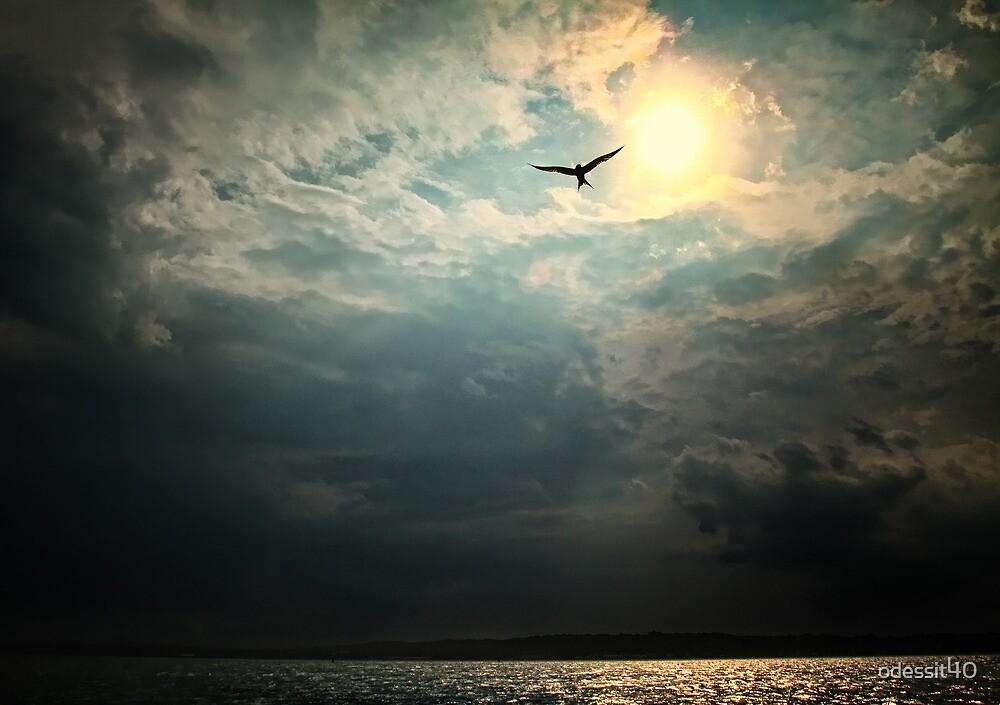 Bird in Sky by odessit40