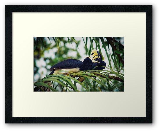 Hornbills by Dean Mullin