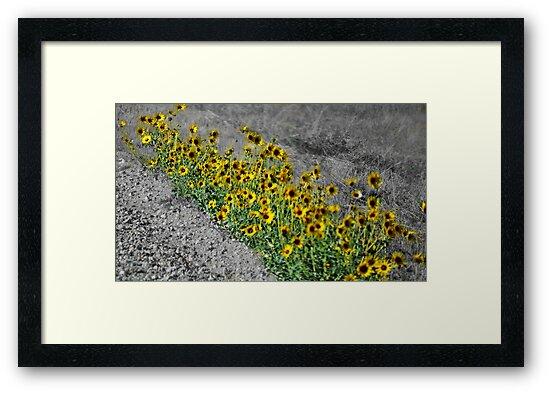 Yellow Streak by Amy Pehringer
