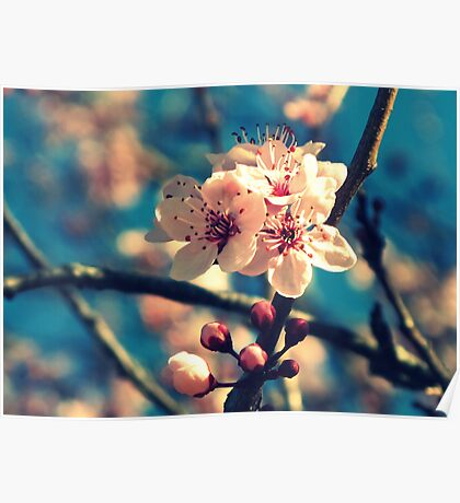 Blue Sky and Spring Blossoms Poster