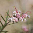 'Pink Lady'-6184 by Barbara Harris