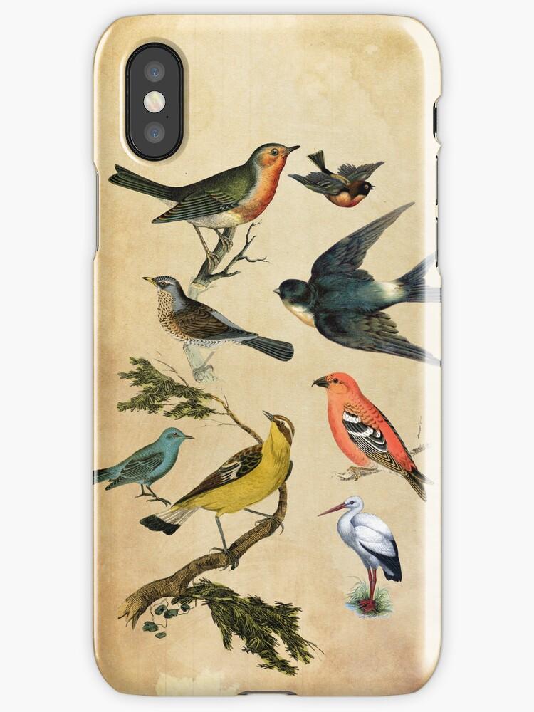 Birds by babibell