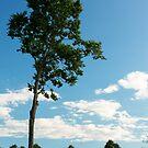 North Bay Tree by Melody Ricketts