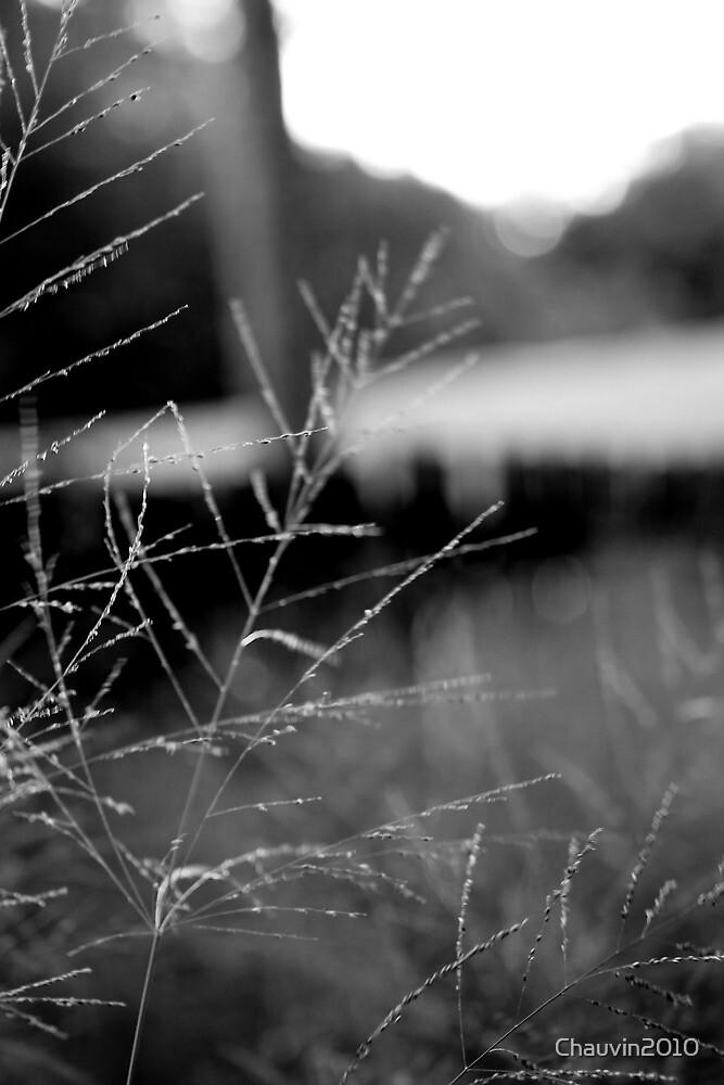 Long Grassy Bokeh by Chauvin2010