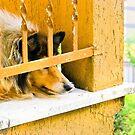 Dog in Balcony by BellatrixBlack