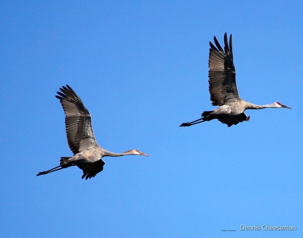 Sandhill Cranes by Dennis Cheeseman