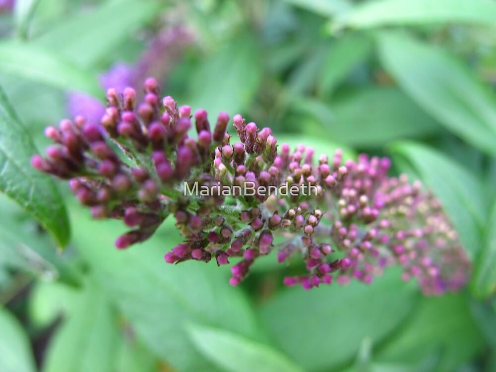 Purple serpeant by MarianBendeth