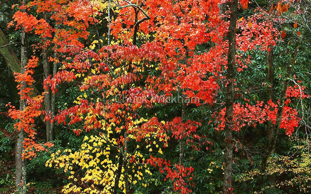MAPLES ,AUTUMN by Chuck Wickham