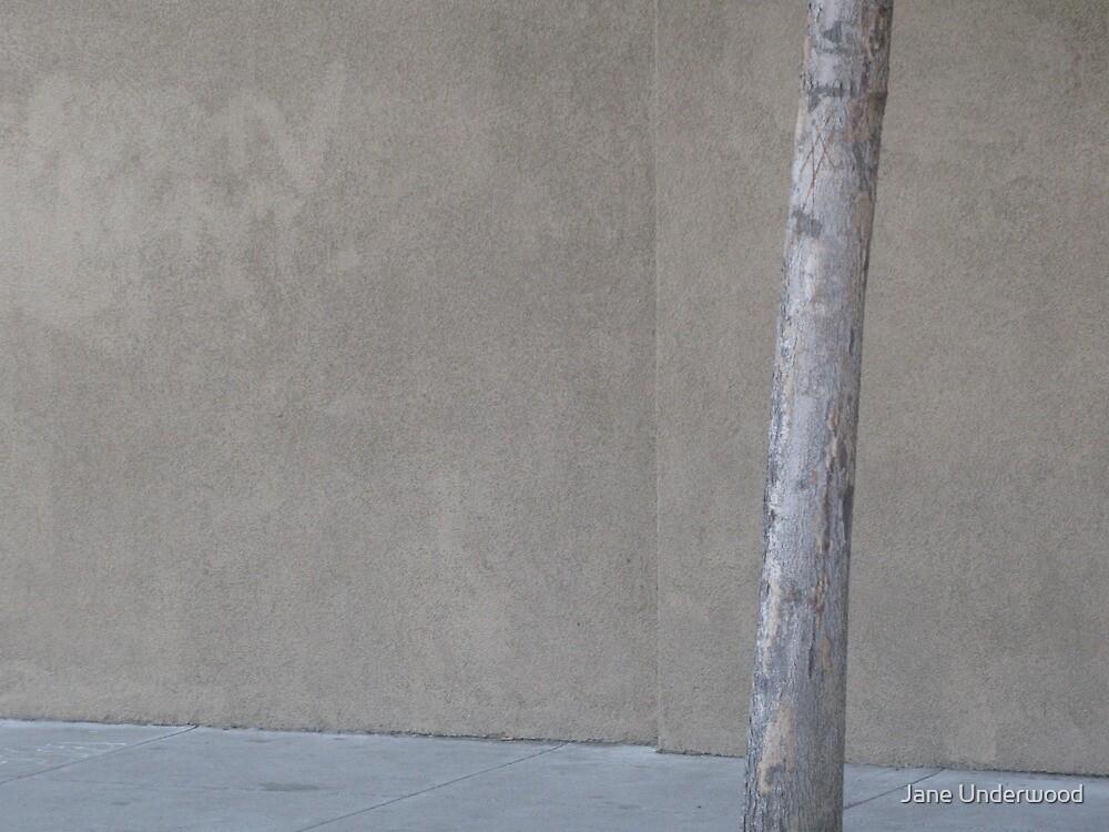 Minimalist Urban Nature by Jane Underwood