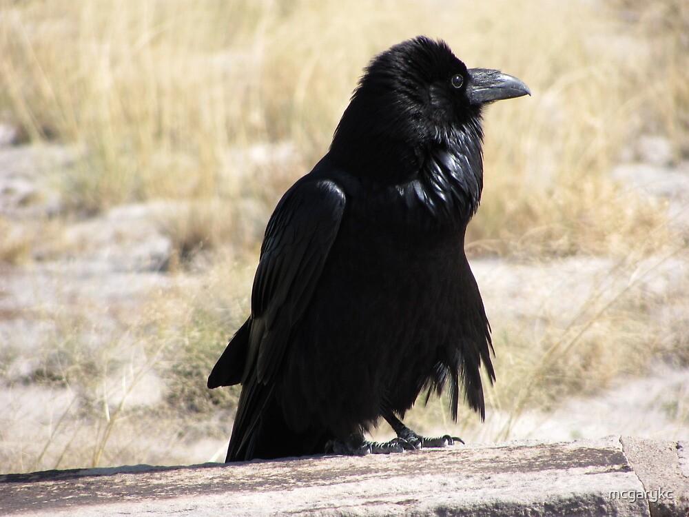 Raven by mcgarykc