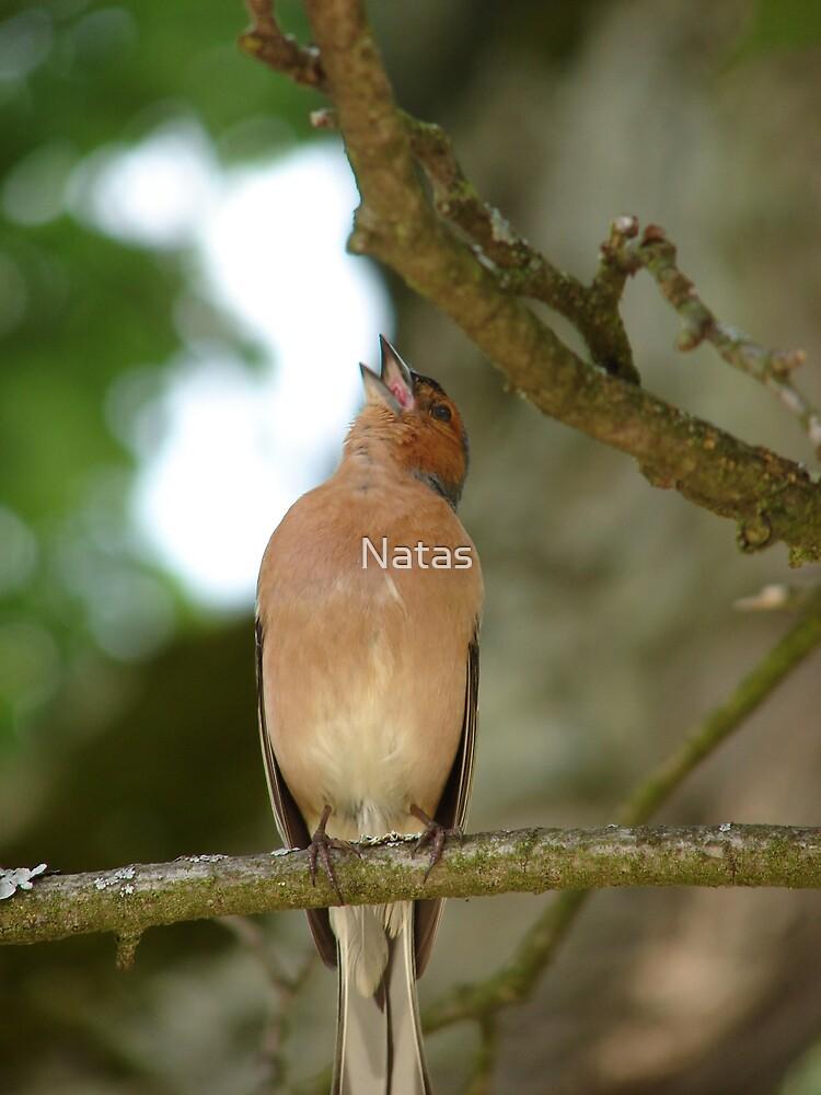 Singing bird by Natas