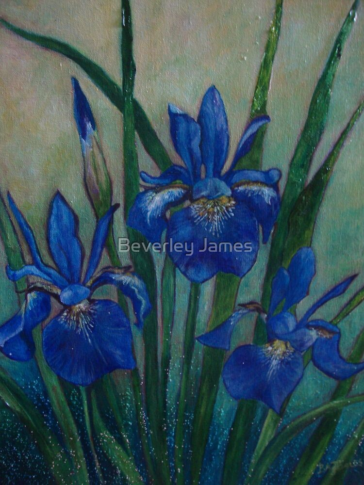 Blue Iris by Beverley James