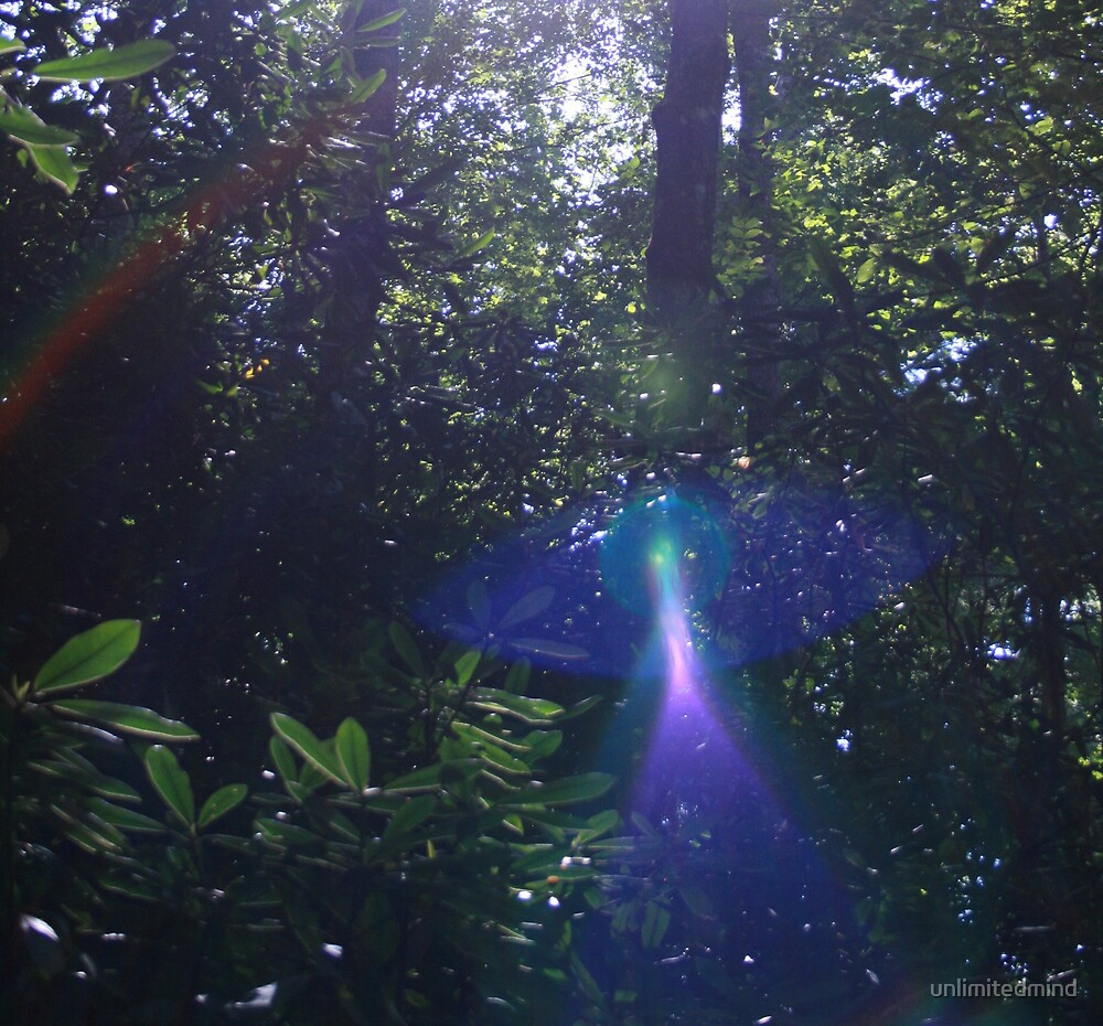 Enchanted Forest by unlimitedmind