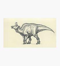 Lambeosaurus lambei Photographic Print