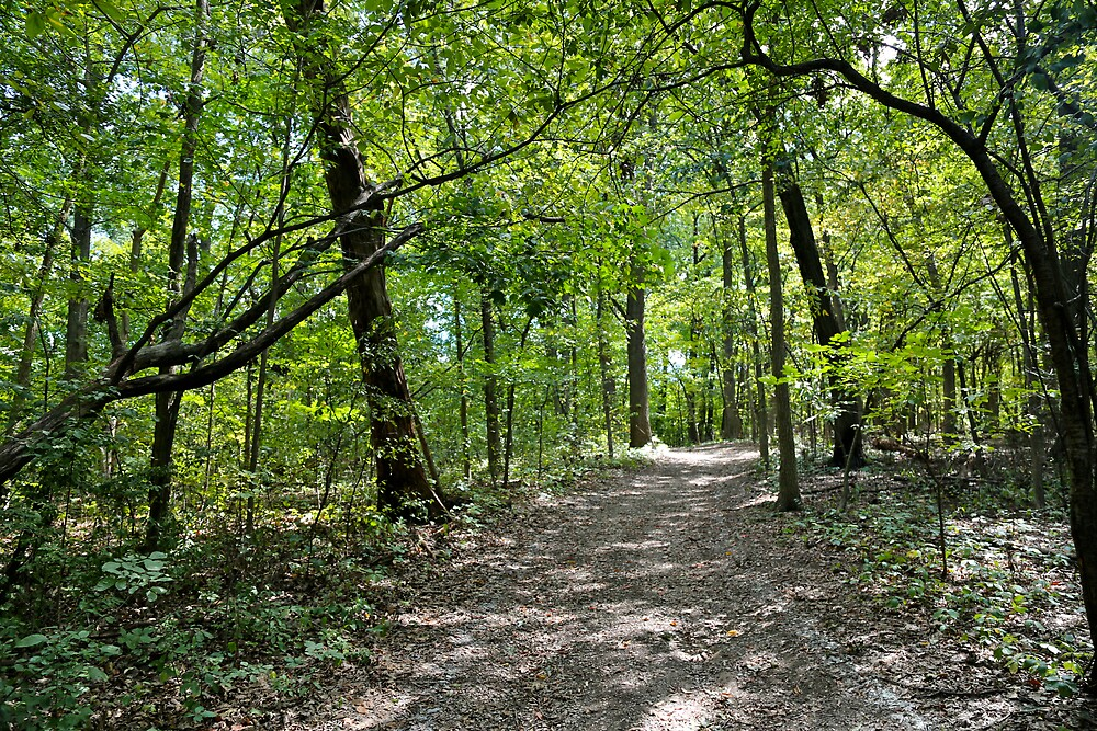 Trail in the Leroy Oaks Forest by brigant